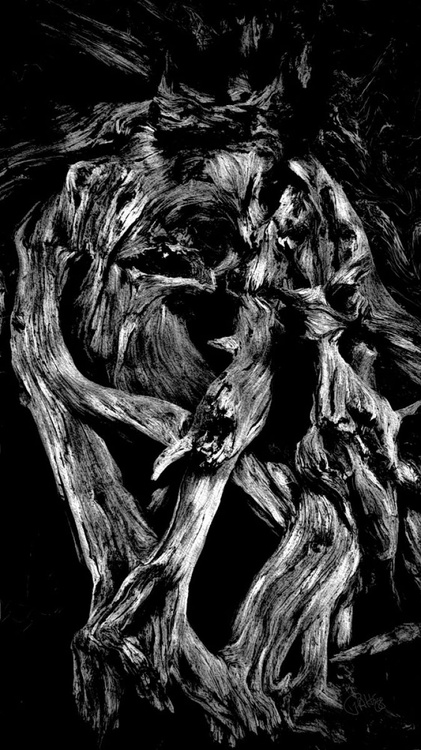 Snaking Root - Image 0