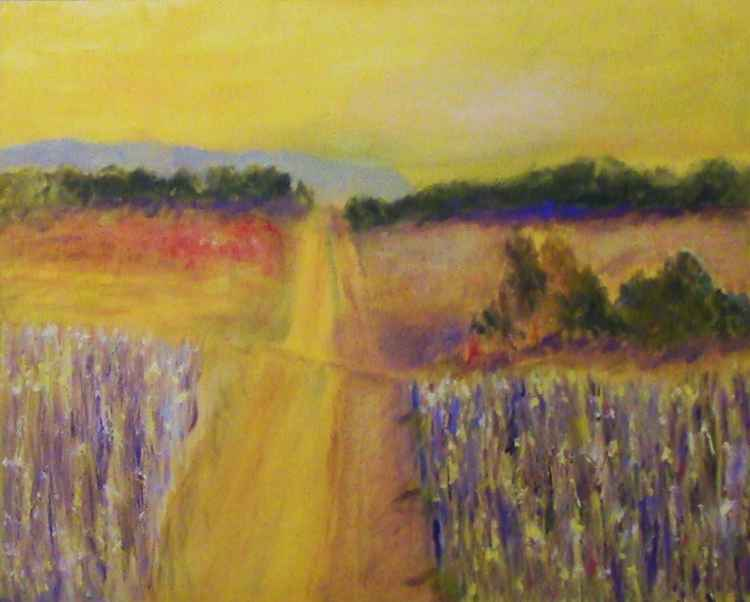 Central Texas Corn Field