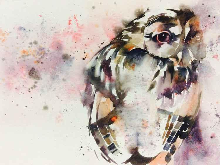 Coy tawny owl -