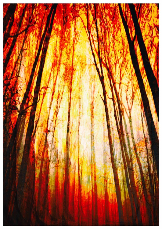 Fire Forest - Image 0