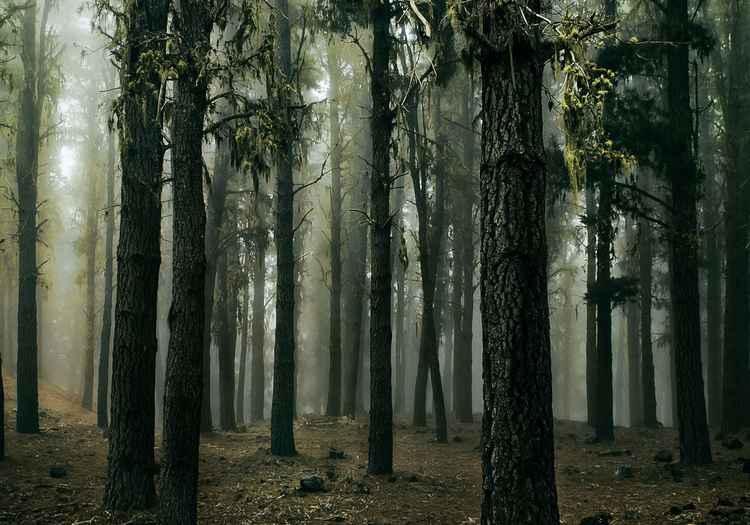 Th primordial wood -