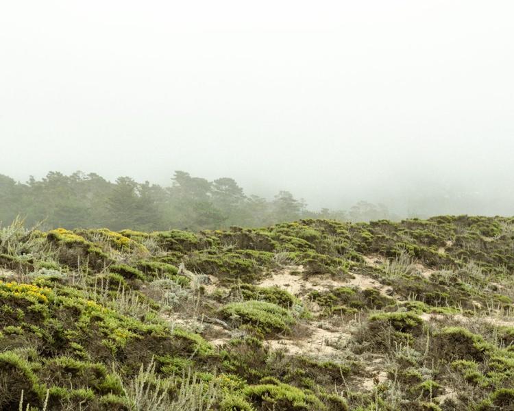 Lobos Scrub, 16x20 - Image 0