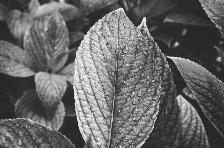 Leaves III (LIMITED EDITION OF 50 | SMALL) - Image 0