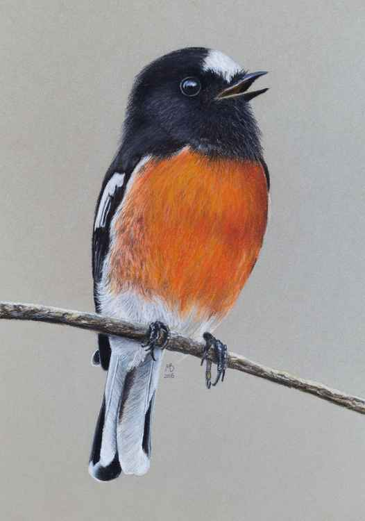 "Original pastel drawing ""Pacific robin"" -"