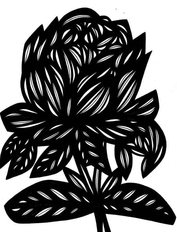 Rose Arcadian Original Drawing -