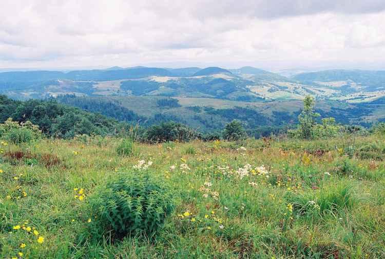 Carpatian landscape -
