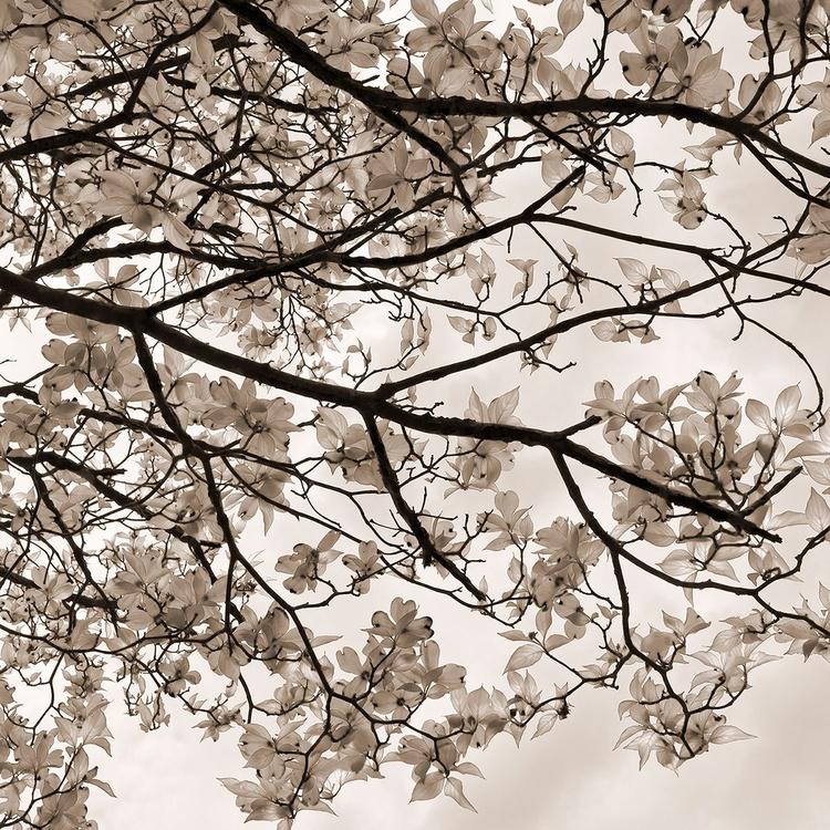 Dogwood Branch - Image 0