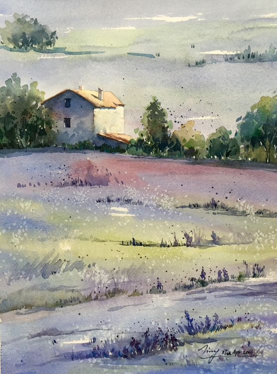 Lavender Morning - Image 0