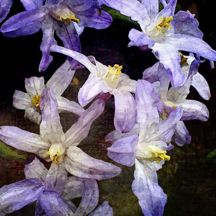 blossom - Image 0
