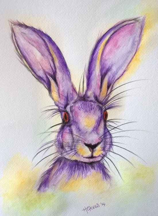 Purple Hare -