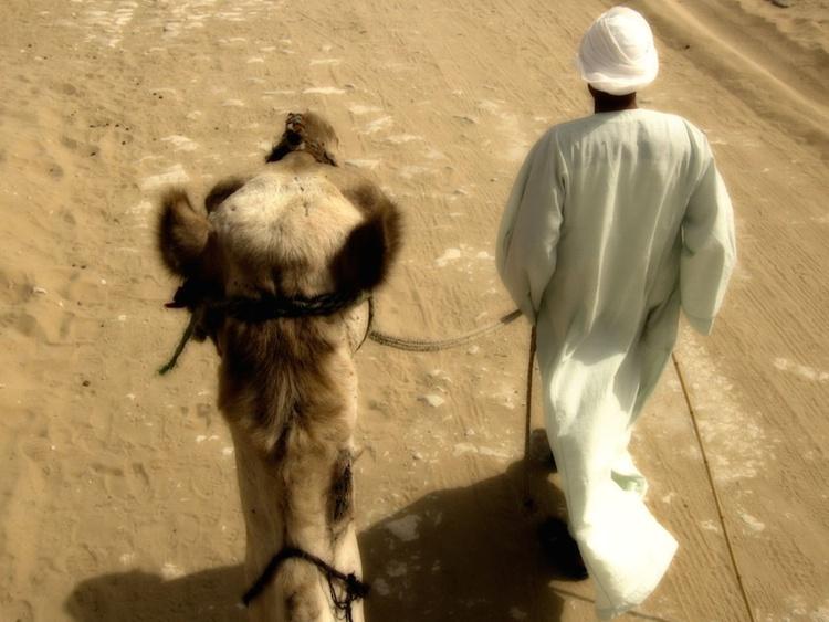 Camel Time - Image 0