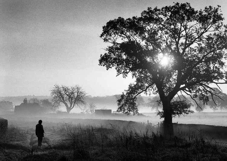 November Dawn -