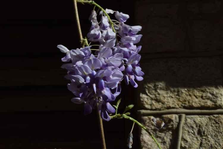 Blue Flower -