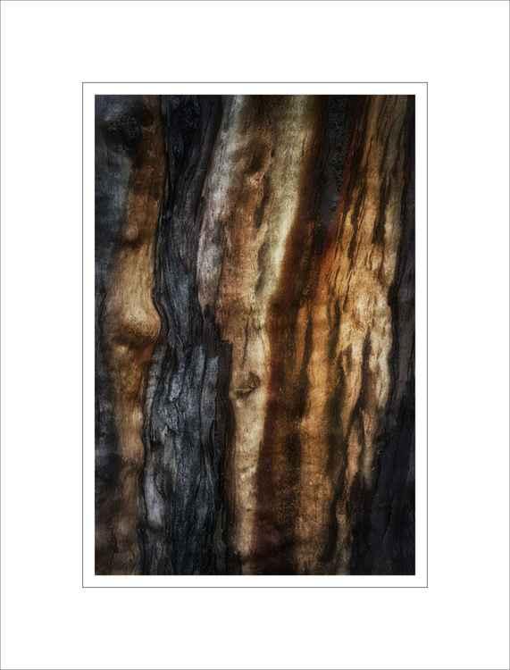 Bark Study 33 -
