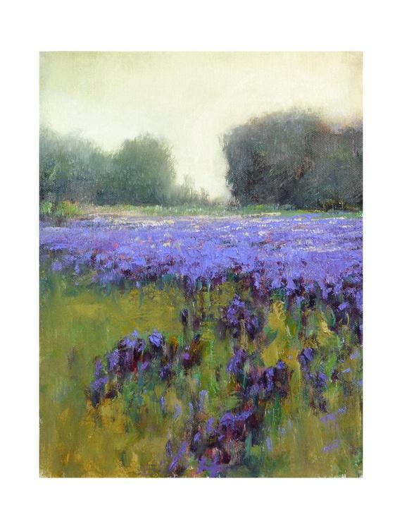 Soft Violet - Image 0