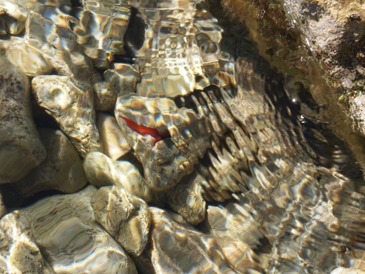 Water metamorphosis I - Image 0