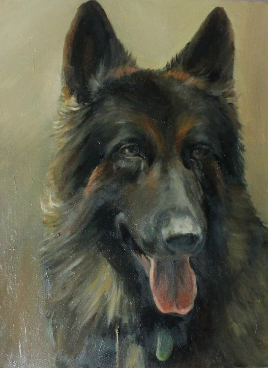 German Shepherd - Image 0
