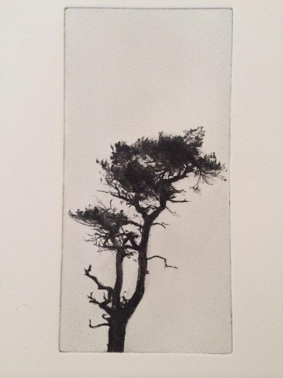 Tree 1 - Image 0