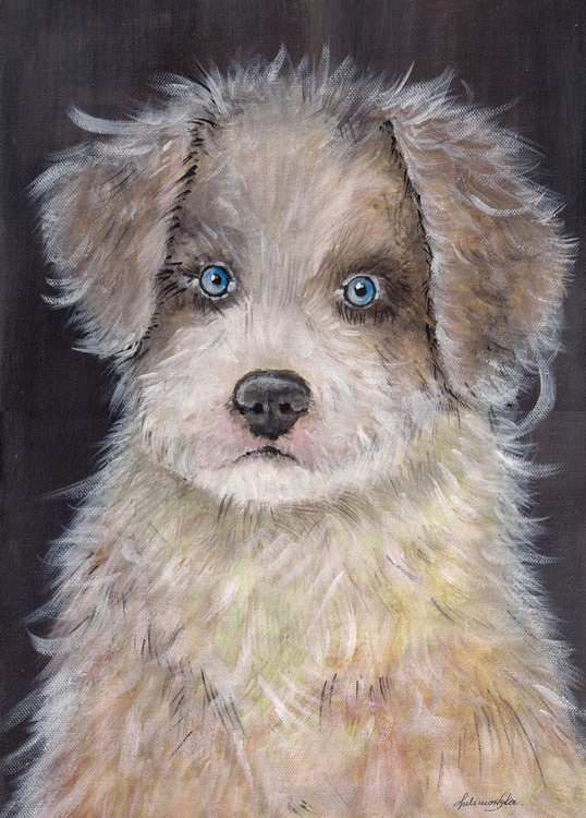 Border Collie Puppy - Image 0