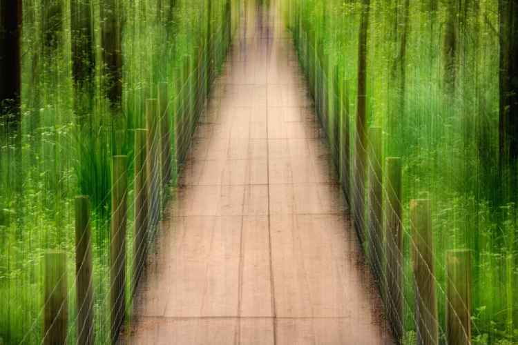 Marshland walkway -