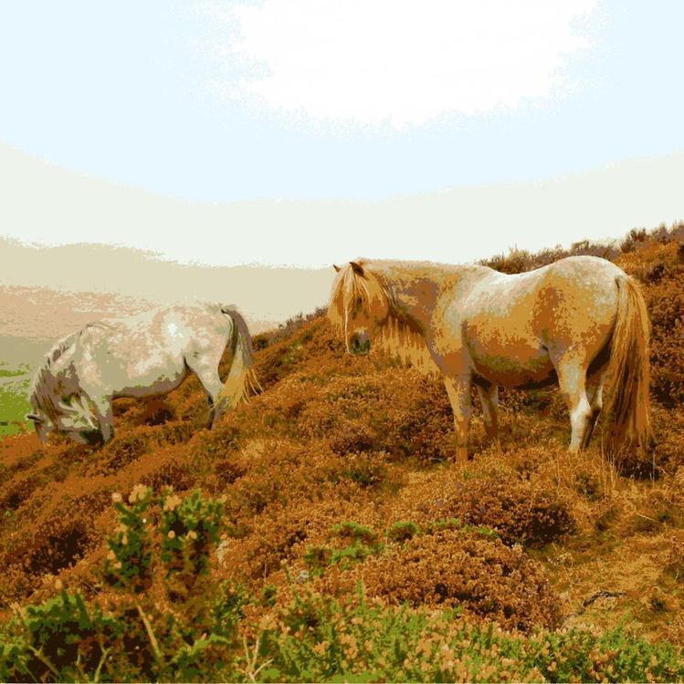 Mountain Ponies #2 - Image 0