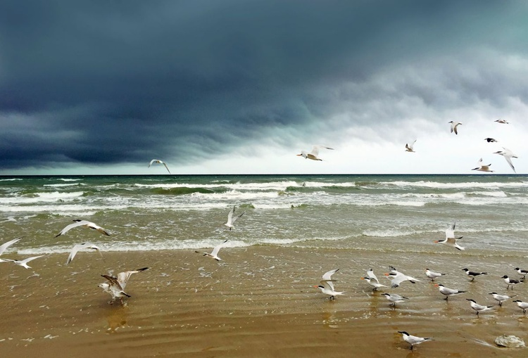 Storm and birds - Image 0