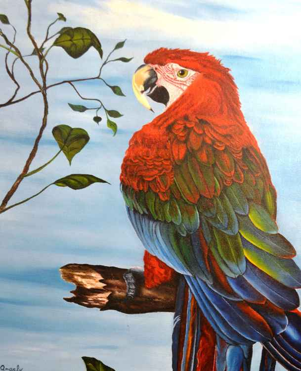 The Red And Green Macaw -