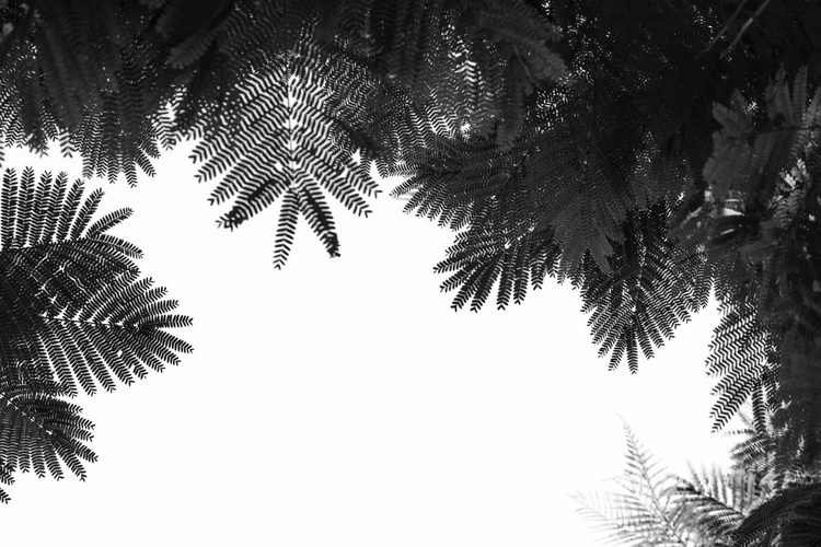 The Tree Top - Limited Edition 2 of 10 - Image 0