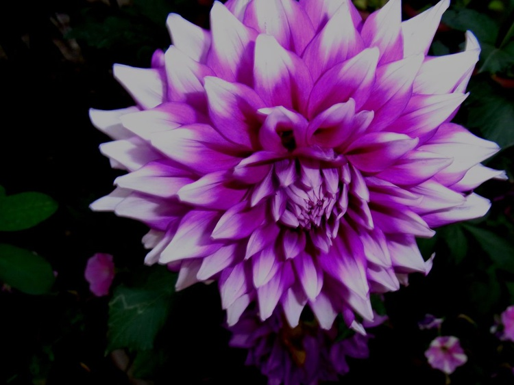 FLOWERS OF PEACE - Image 0