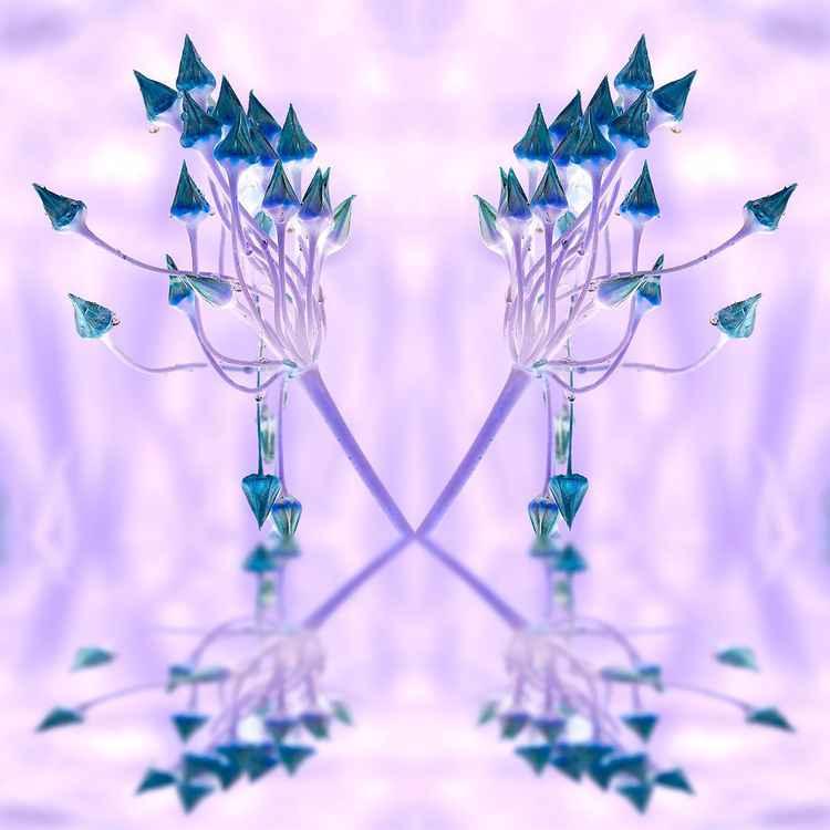 Allium 'Castles'
