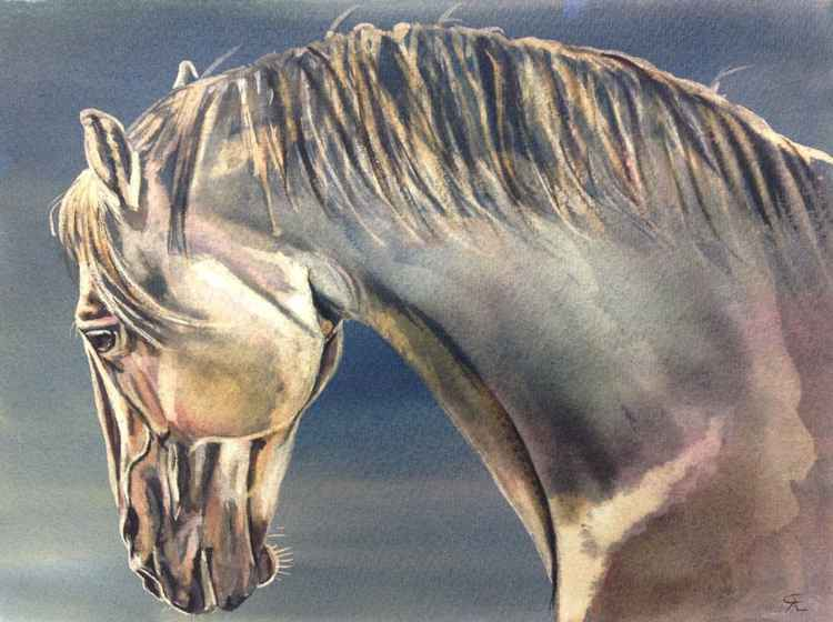 'Morning glory' horse -