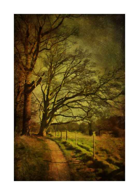 Down the woodland path -
