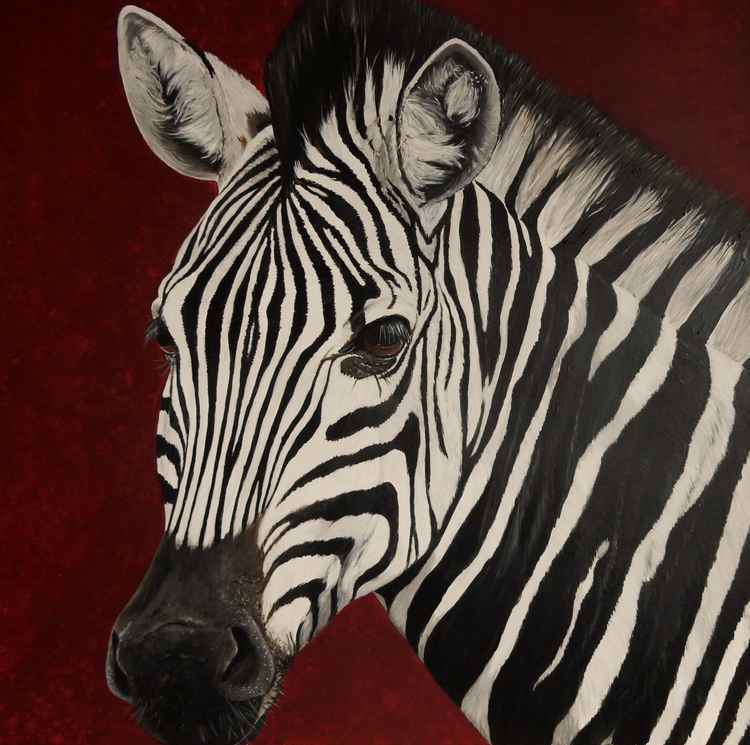 Zebra-glen afric -