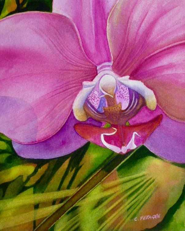 Pink Orchid -