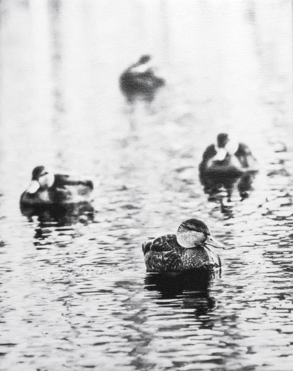 Four Ducks, Fine Art Photography, 1/1 - Image 0
