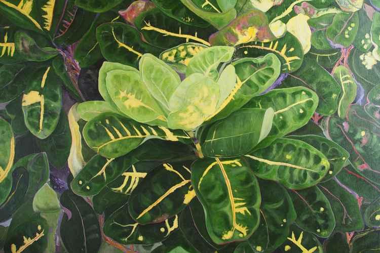 Floral Series 1