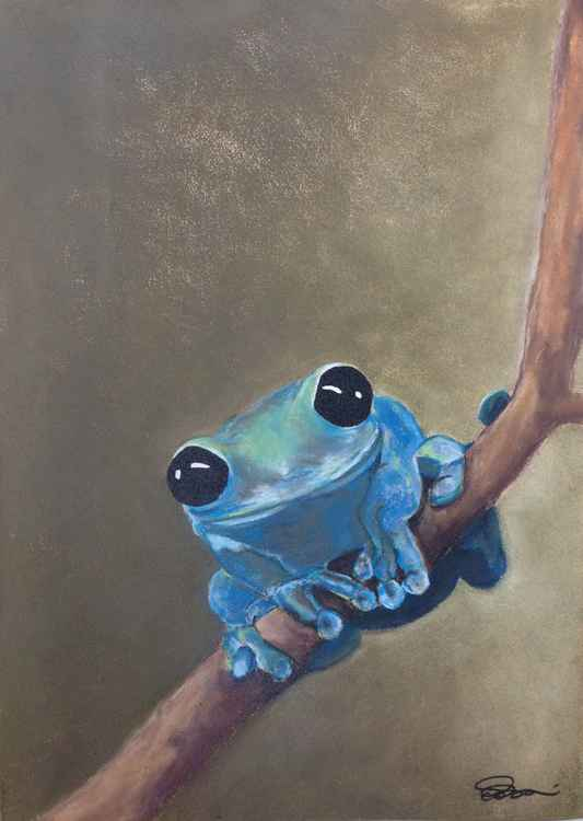 Blue Tree Frog on a Branch