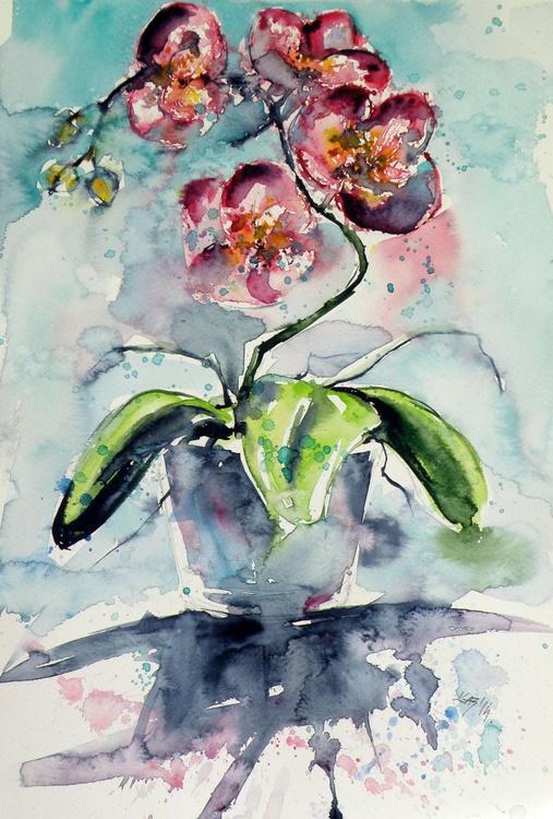 Orchidea - Image 0