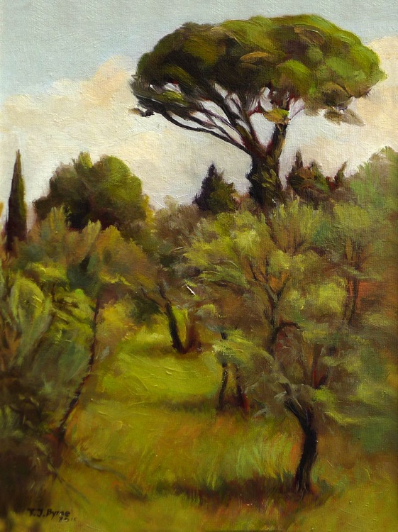 Tuscan Pine from the Strozzi - Image 0