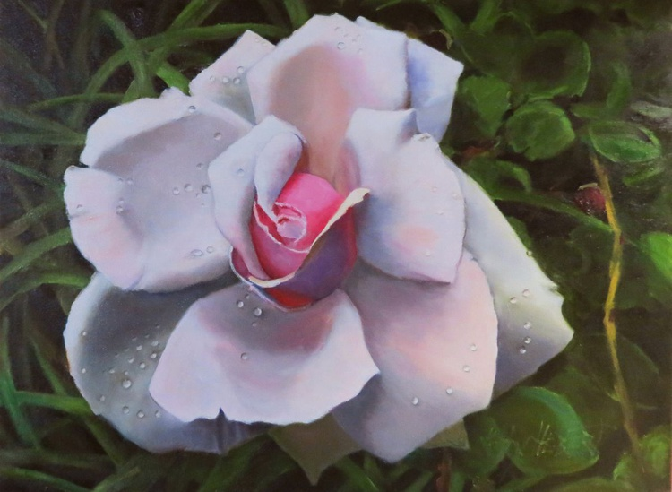 Pink Rose with Dew Drops - Image 0