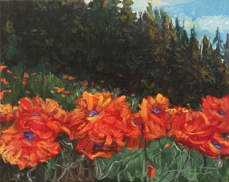 The Presence of Poppies -