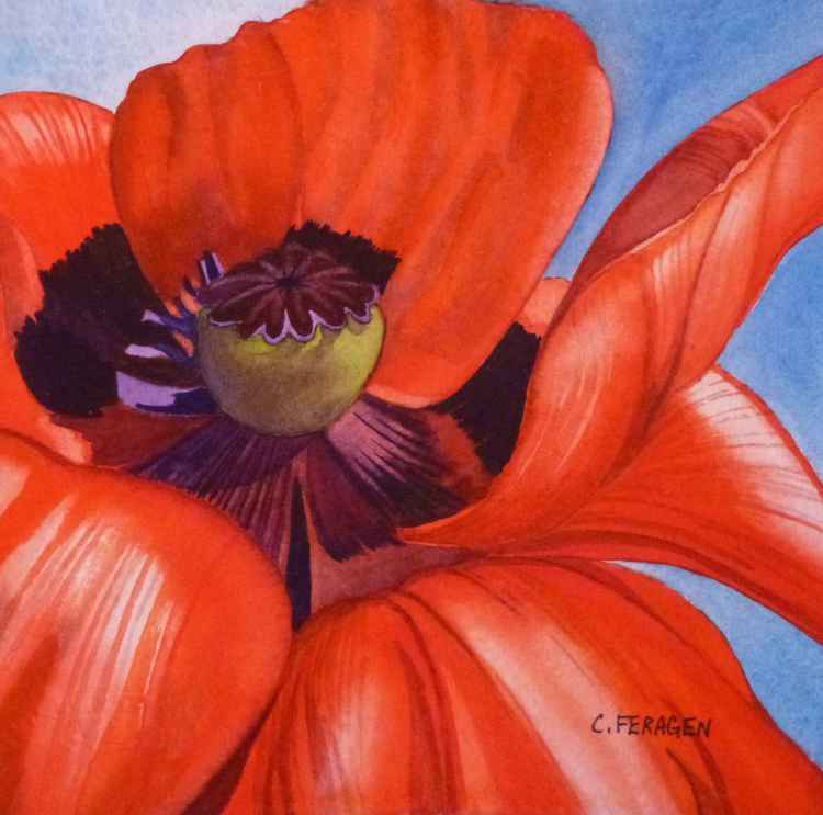 Red Poppy One -