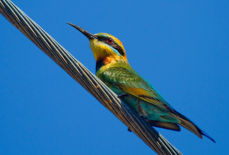 Bird on a wire - Image 0