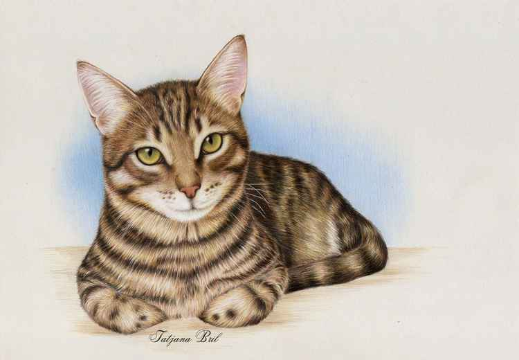 Brown cat -