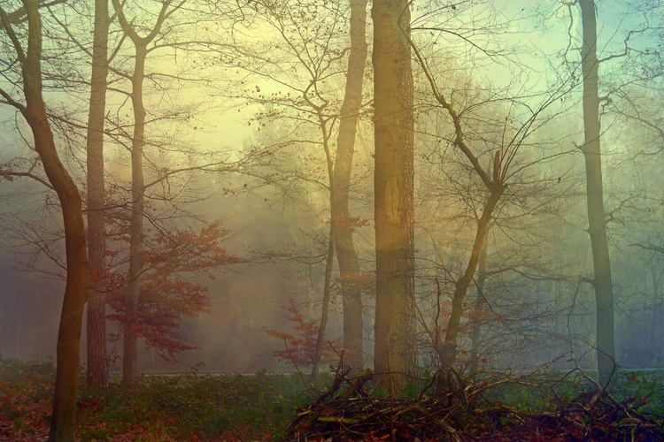 Quiet - Canvas 75 x 50cm - Image 0
