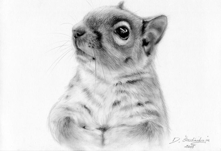 Cute Squirrel - Image 0