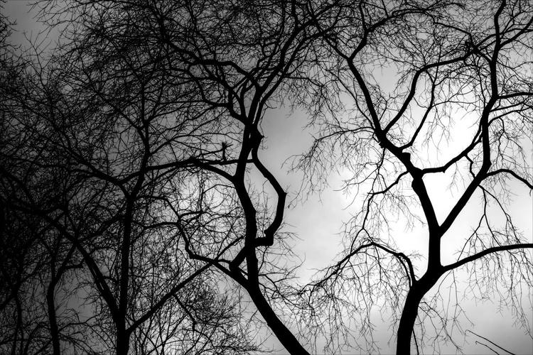 Winter Trees - Image 0