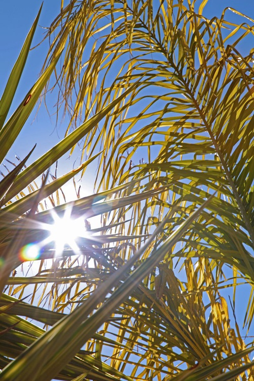 Sunlit Palms - Image 0