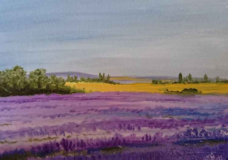 "lavender fields original oil 7""x5"" -"