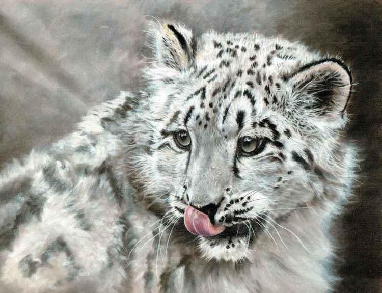 'Sneachta' - Snow Leopard Cub